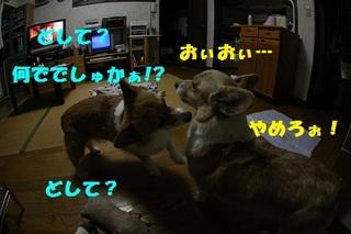 sIMG40_2012_12_03_3918.jpg