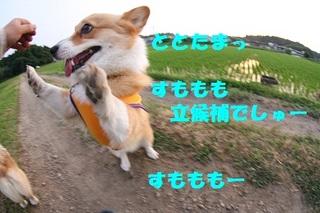 sIMG40_2013_06_05_9999_27.jpg