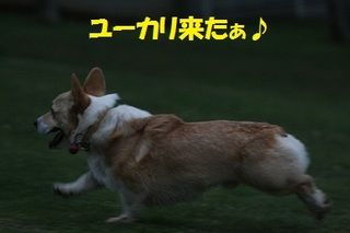 asIMG_2011_05_13_5150.jpg