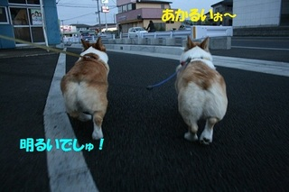 s20110419_0322.jpg