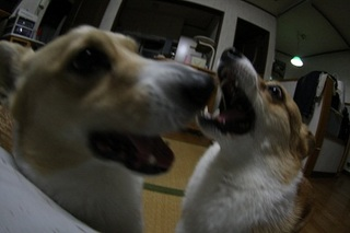 sIMG40_2012_12_04_4049.jpg