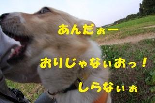 sIMG40_2013_06_05_9999_22.jpg