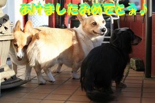 sIMG5_2013_01_01_7813.jpg
