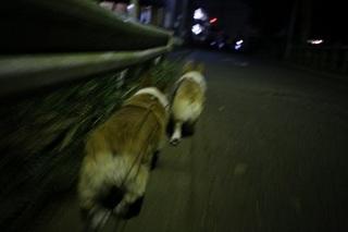 sIMG6_2012_01_10_9208.jpg
