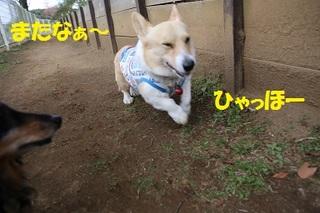 sIMG6_2014_03_31_9999_197.jpg