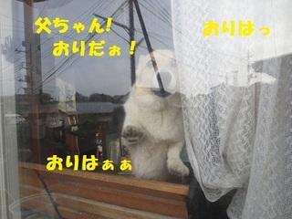 sIMG_0537.jpg
